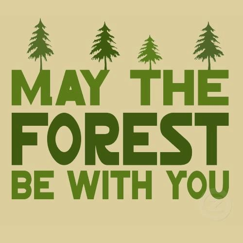 may the forest be with you.jpg?142264892